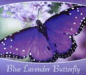 blue-lavendat-butterfly